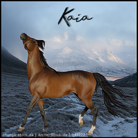HEE   Kaia by EdgardaleStables