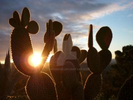 Morning Cactus by TCMCorpse