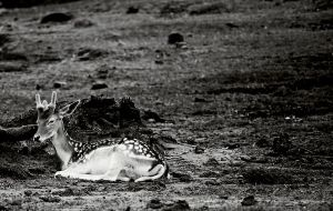 Resting Place Mono by Bhigg