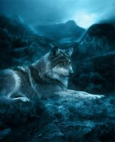 The Lone Wolf by DaniaArts