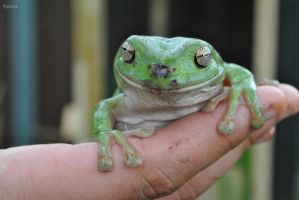 Dirty Frog by Hipppiee