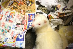 Albino Ferret Box.7 by That1nerdychick