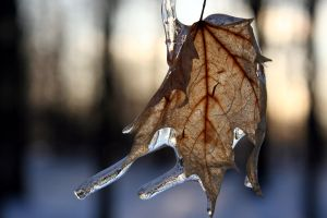 Icy Leaf by edgyqueen