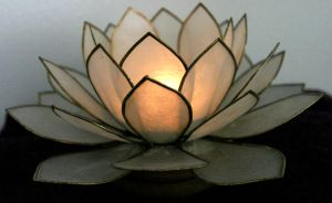 Shell Lotus by Della-Stock