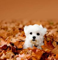 28-puppies-kittens-love-fall--large-msg-1378490603 by cookiegirl11234