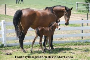 Momma And Foal 9 by FantasyDesignStock
