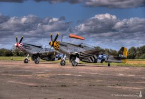 A brace of Mustangs by Salemik