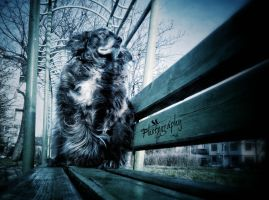 Border Collie by stasiabv