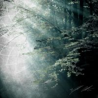 Forest Tranquility II by manfishinc