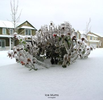Ice Mums by somegeek