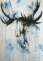 Moose by Hercia