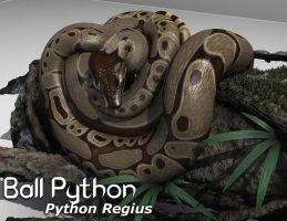 Ball Python for Constrictor by SickleYield