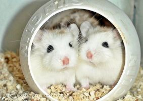 hamster X by KFT-Andri