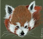 Red panda by Agatha-Macpie