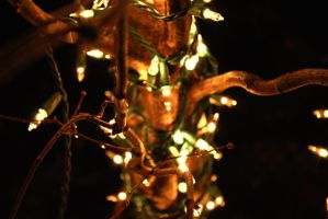 Lights on a tree by etc-2000