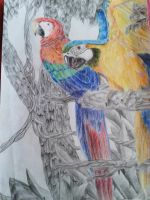 The beautiful colors of Parrots by Chippie18