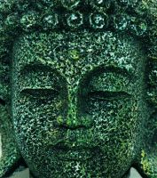 Buddha Head by Delia-Stock