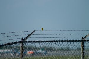 A fellow plane spotter chillin' on the fence by tdogg115