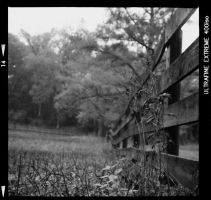 Yashica test roll 3 by prestonthecarartist