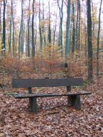 Bank in the autumn forest by archaeopteryx-stocks