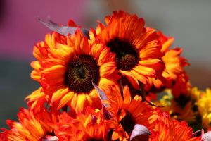 Sunflowers by fl8us-stock