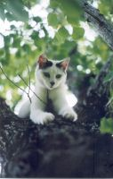 Cat in tree 3 by smackbabe