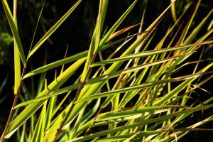 Angular Grass by EarthHart