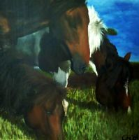 Grazing Pintos by Christa-S-Nelson