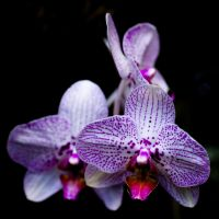 MOBOT: Orchid IV by breaking-reality