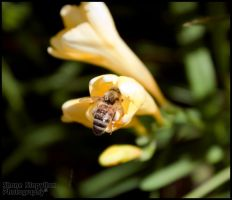 Busy Bee by Sonify