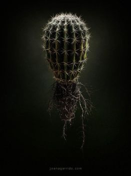 Cactus by coisital