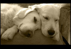 Sepia Snoozers by jet3270 by dogs