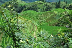 Rice terraces by axlesax