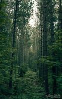 Deep Green Forest by JessicaDobbs