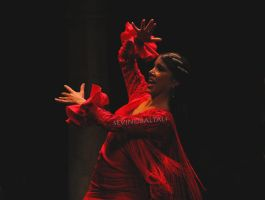 Flamenco by sevincbaltali