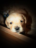 My puppy by MikeleSVK