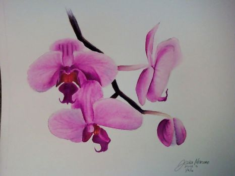 Orchids by Jeniffer21