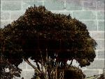 Wall tree by Bohax