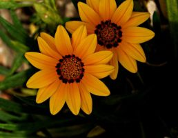 yellow flowers 2 by glad2626
