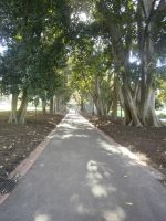park path by LuchareStock