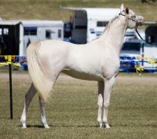 STOCK - Gold Coast show 231 by fillyrox