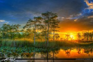 Florida-Wetlands-Sunset-Cypress-Tree-Landscape by CaptainKimo
