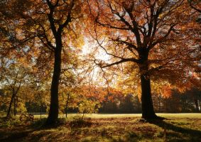 Autumn by scotto