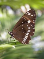 Butterfly at Rossiter Park by bonzaboy