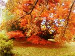 Autumn by LilM15
