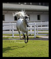 ...FlYing Stallion... by Elegance85