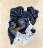 Border Collie by graphiteimage