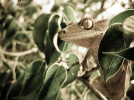 Crested Gecko in Tree by duckey5