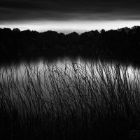 Through The Rushes by AntonioGouveia
