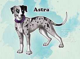 Astra - Catahoula Cur by Anellyz